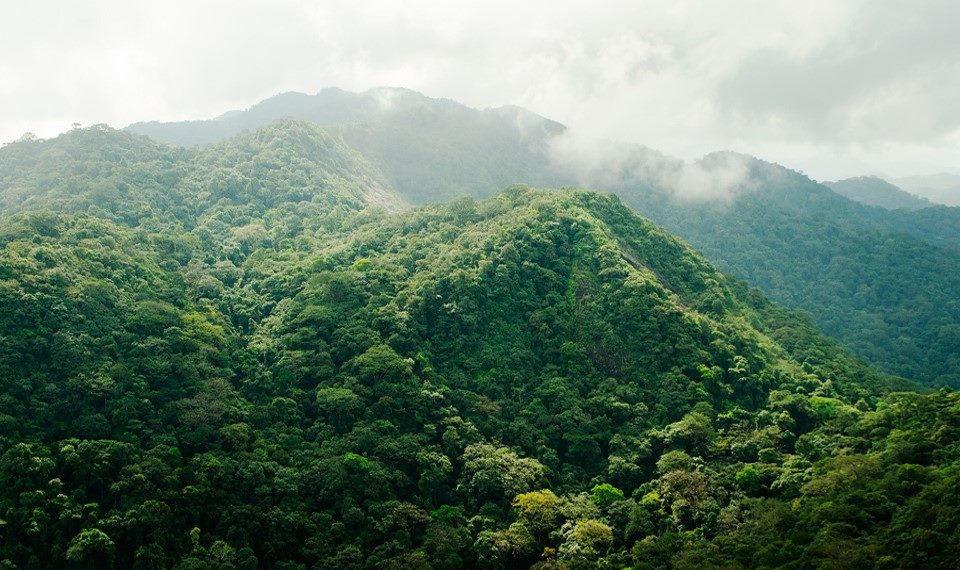 Forest Reserve in Sierra Leone
